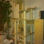 Emil sover i hængekøjen øverst i klatretræet